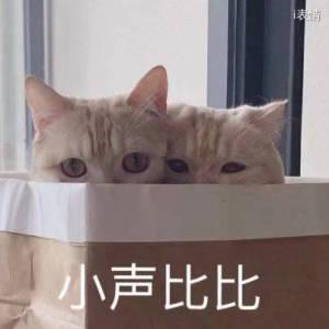 猫咪躲着,小声比比