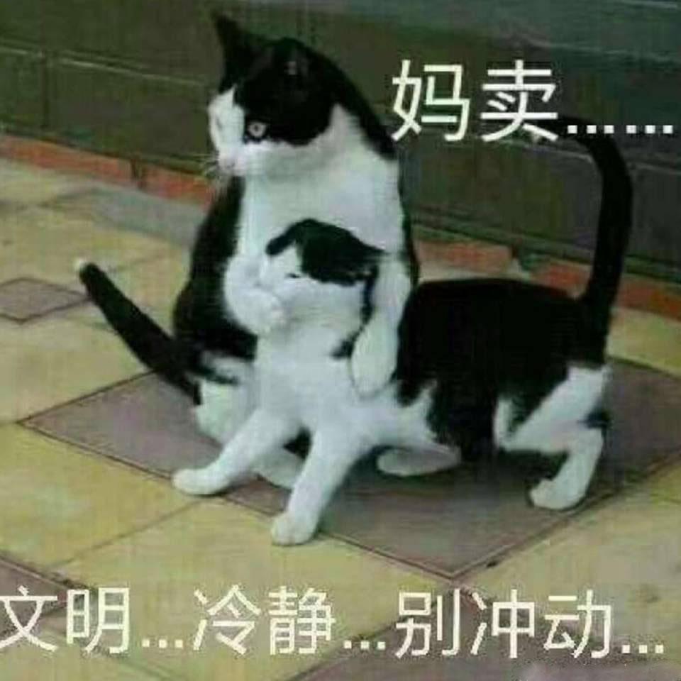 猫咪捂嘴,妈卖批,文明冷静。别冲动-i表情表情包