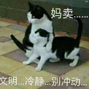 猫咪捂嘴,妈卖批,文明冷静。别冲动