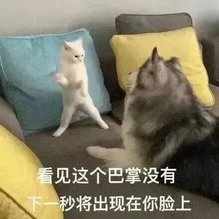猫咪,看见这个巴掌没有,下一秒将出现在你脸上-i表情