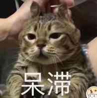 猫咪,呆滞-i表情