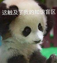 熊猫捂头,这触及了我的知识盲区-i表情