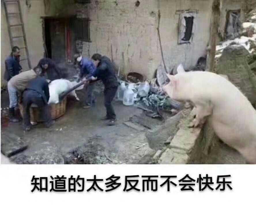 知道的太多反而不会快乐,猪看到别的被宰