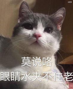 猫咪莫说咯眼睛水夹不住老