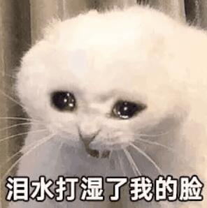 猫咪哭,泪水打湿了我的脸