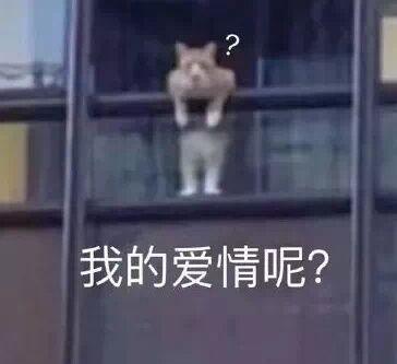 猫咪探头我的爱情呢