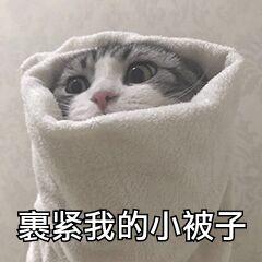 猫咪裹紧我的小被子冷