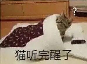 猫咪听完醒了