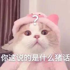 猫咪你这说的是什么猪话
