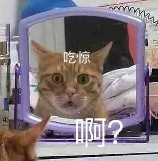 猫咪啊?吃惊