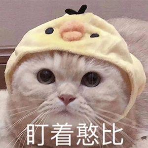 猫咪盯着憨比
