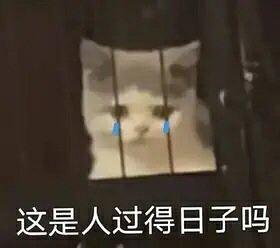 猫咪哭,这是人过得日子吗-i表情表情包