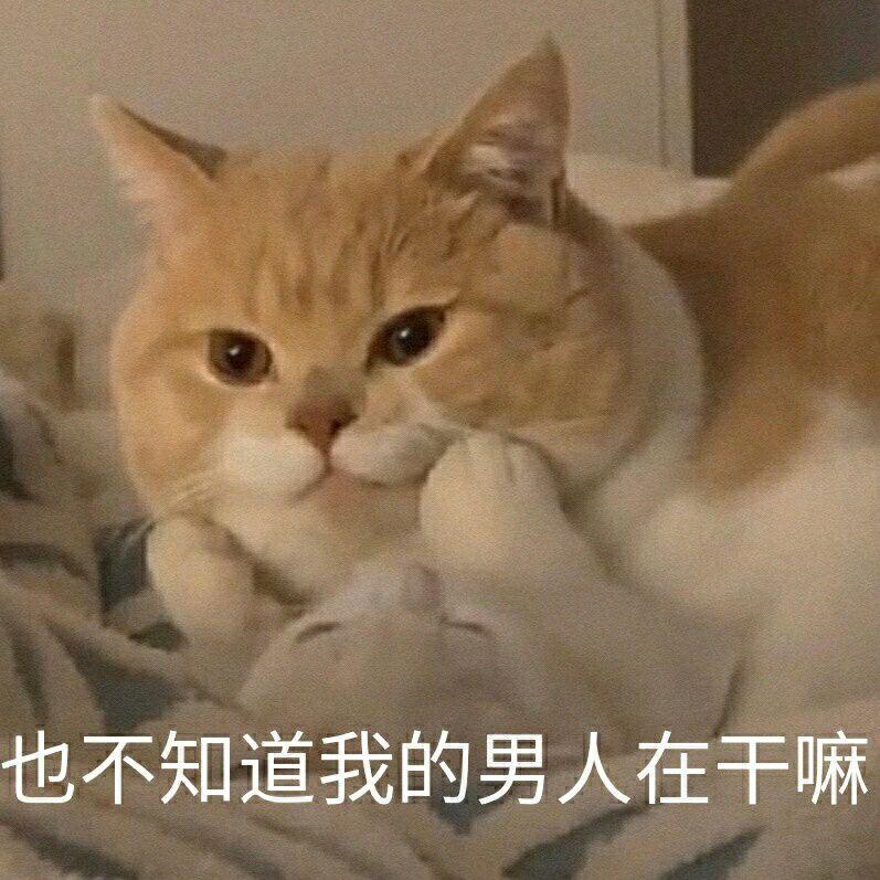 猫咪:也不知道我的男人在干嘛-i表情表情包