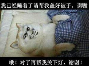 狗:我已经睡着了请帮我盖一下被子,谢谢 哦!对了再帮我关下灯