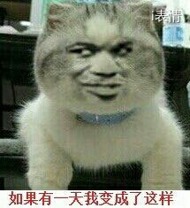 小猫:如果有一天我变成了这样,请记住我曾经的样子