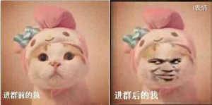 粉红色的小萌猫:进群前的我,进群后的我
