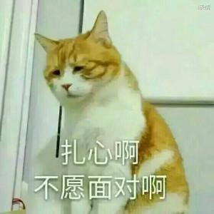 猫咪低着眯着眼睛:扎心啊,不愿面对啊