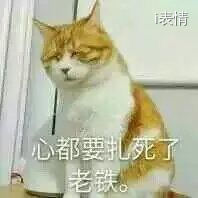 猫咪眯着眼睛:心都要扎死了,老铁