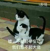 拉着一只猫咪:嘘,不要轻举妄动,我们惹不起大佬