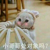猫咪脸红:小哥哥处对象吗?