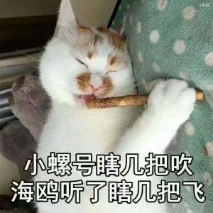 猫咪吹笛子:小螺号瞎几把吹海鸥听了瞎几把飞