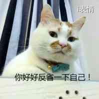 猫咪:你好好反省一下自己!