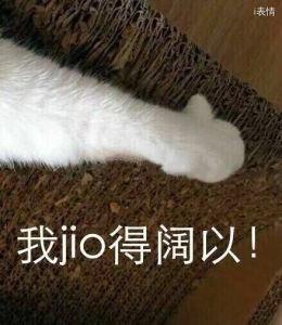 猫咪伸出手:我jio得阔以!我觉得可以
