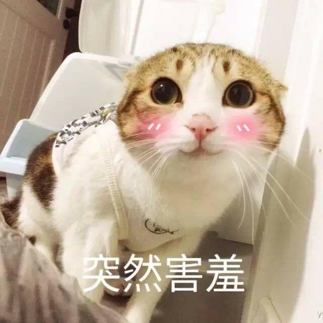 猫咪脸红:突然害羞