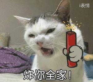 猫咪抓着爆竹:炸你全家!