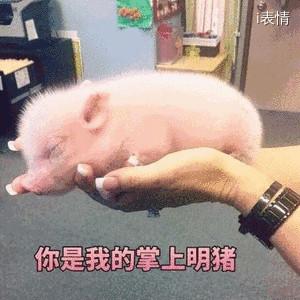 举着一头猪:你是我的掌上明猪