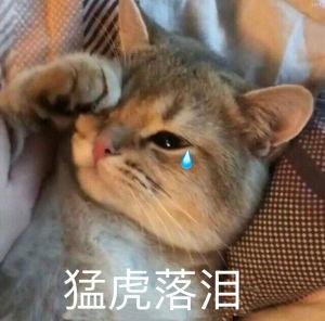 猫咪抹眼泪:猛虎落泪