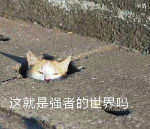 猫咪从地缝里探出头:这就是强者的世界吗