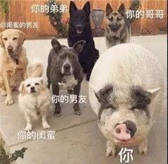 一如猪跟狗看着你,你的闺蜜,你的男友,你的弟弟,你的哥哥