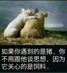 如果你遇到的是猪,你不用跟他谈思想,因为它关心的是饮料